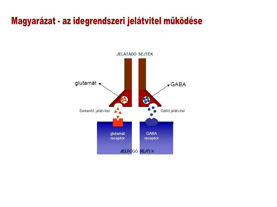 JELFOGÓ SEJT JELÁTADÓ SEJTEK GABA glutamát receptor GABA receptor Serkentő jelátvitel Gátló jelátvitel JELFOGÓ SEJTEK