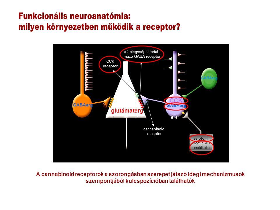 serotonin nicotinikus acetilkolin GABAerg CCK glutámaterg α2 alegységet tartal- mazó GABA receptor cannabinoid receptor CCK receptor GABAerg A cannabinoid receptorok a szorongásban szerepet játszó idegi mechanizmusok szempontjából kulcspozícióban találhatók