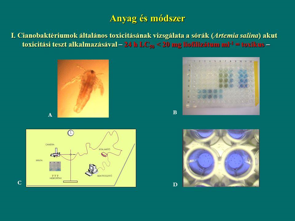 Anyag és módszer I. Cianobaktériumok általános toxicitásának vizsgálata a sórák (Artemia salina) akut toxicitási teszt alkalmazásával – 24 h LC 50 < 2