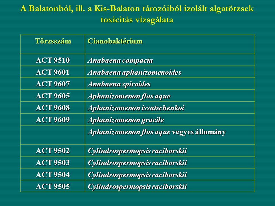 A Balatonból, ill. a Kis-Balaton tározóiból izolált algatörzsek toxicitás vizsgálata TörzsszámCianobaktérium ACT 9510 Anabaena compacta ACT 9601 Anaba