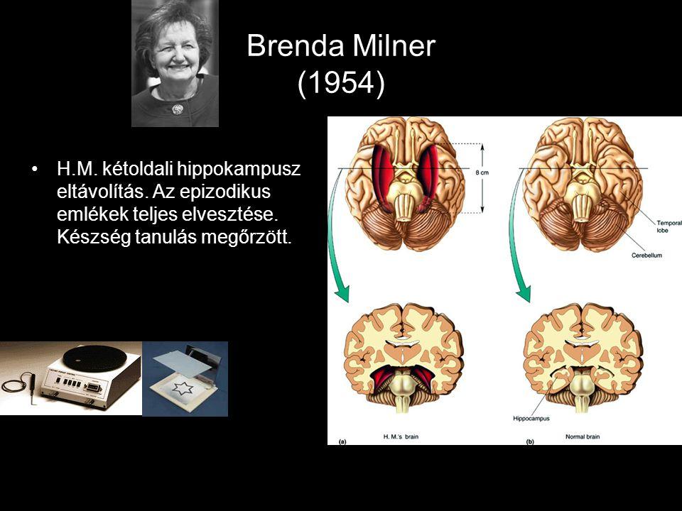 Brenda Milner (1954) H.M. kétoldali hippokampusz eltávolítás. Az epizodikus emlékek teljes elvesztése. Készség tanulás megőrzött.