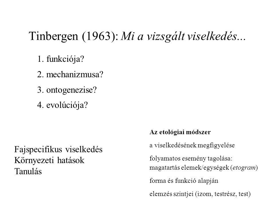 1.funkciója. 2. mechanizmusa. 3. ontogenezise. 4.