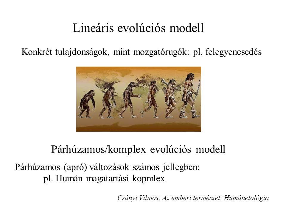 Lineáris evolúciós modell Párhúzamos/komplex evolúciós modell Konkrét tulajdonságok, mint mozgatórugók: pl.