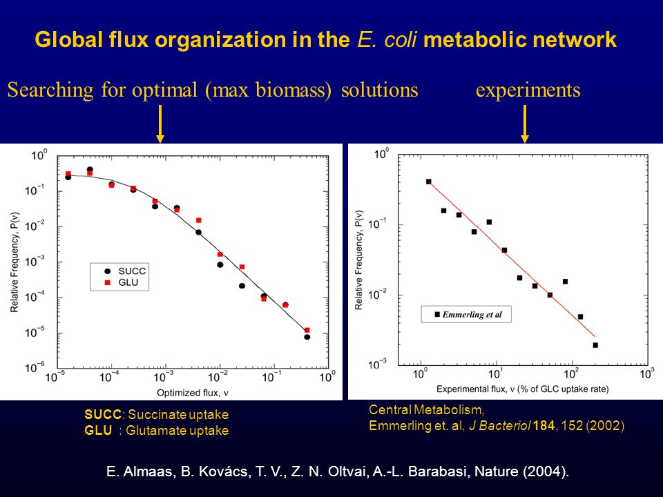 Global flux organization in the E. coli metabolic network E. Almaas, B. Kovács, T. V., Z. N. Oltvai, A.-L. Barabasi, Nature (2004). SUCC: Succinate up
