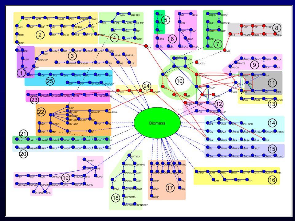 Inhomogeneity in the local flux distribution ~ k -0.27 Mass flows along linear pathways