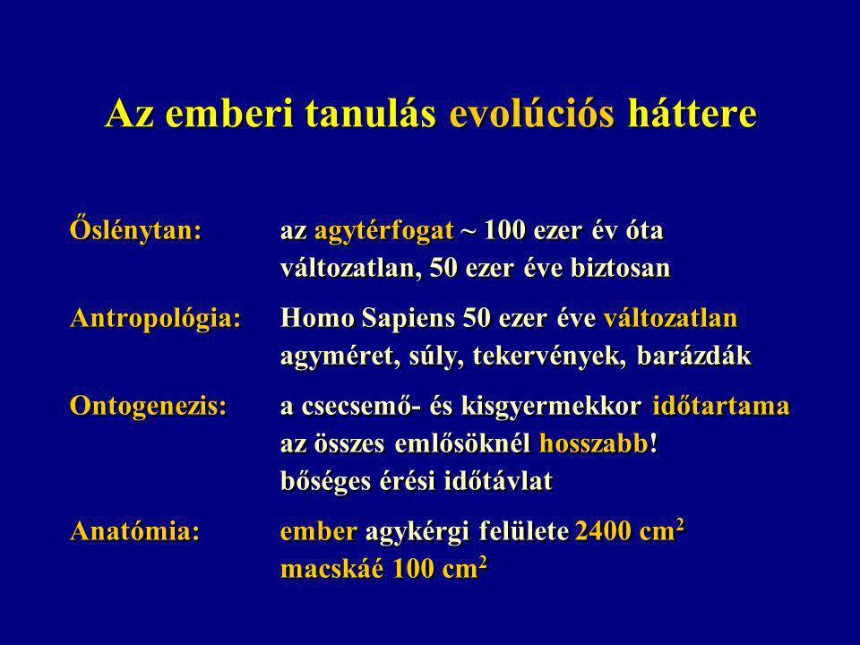 Az emberi tanulás evolúciós háttere Őslénytan:az agytérfogat ~ 100 ezer év óta változatlan, 50 ezer éve biztosan Antropológia:Homo Sapiens 50 ezer éve változatlan agyméret, súly, tekervények, barázdák Ontogenezis:a csecsemő- és kisgyermekkor időtartama az összes emlősöknél hosszabb.