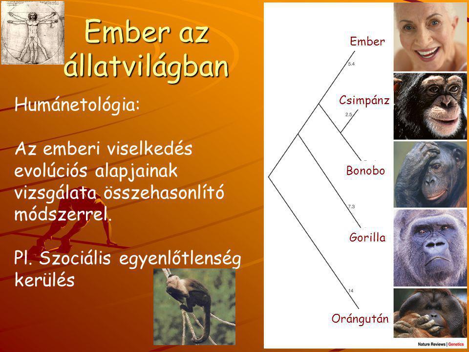 Ember az állatvilágban Humánetológia: Az emberi viselkedés evolúciós alapjainak vizsgálata összehasonlító módszerrel. Pl. Szociális egyenlőtlenség ker