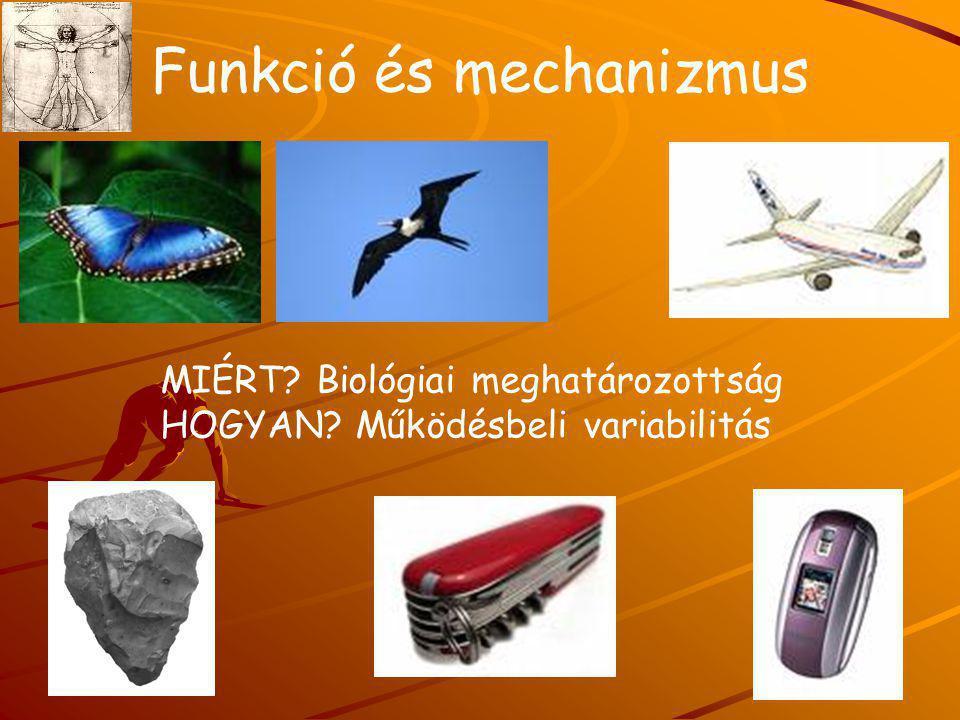 Funkció és mechanizmus MIÉRT? Biológiai meghatározottság HOGYAN? Működésbeli variabilitás