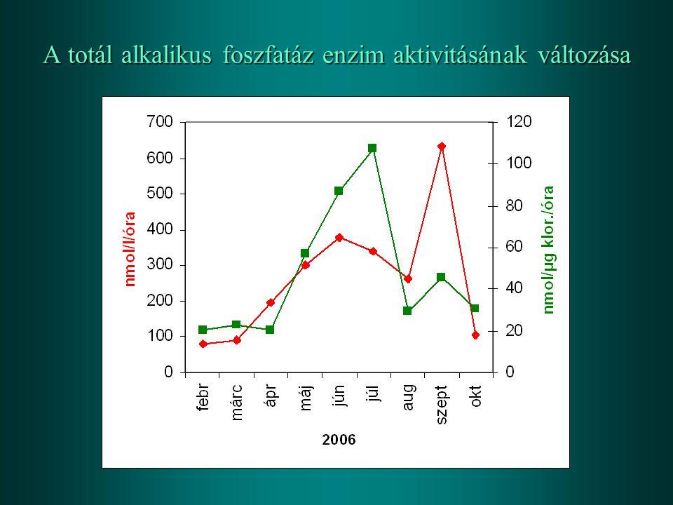 A totál alkalikus foszfatáz enzim aktivitásának változása
