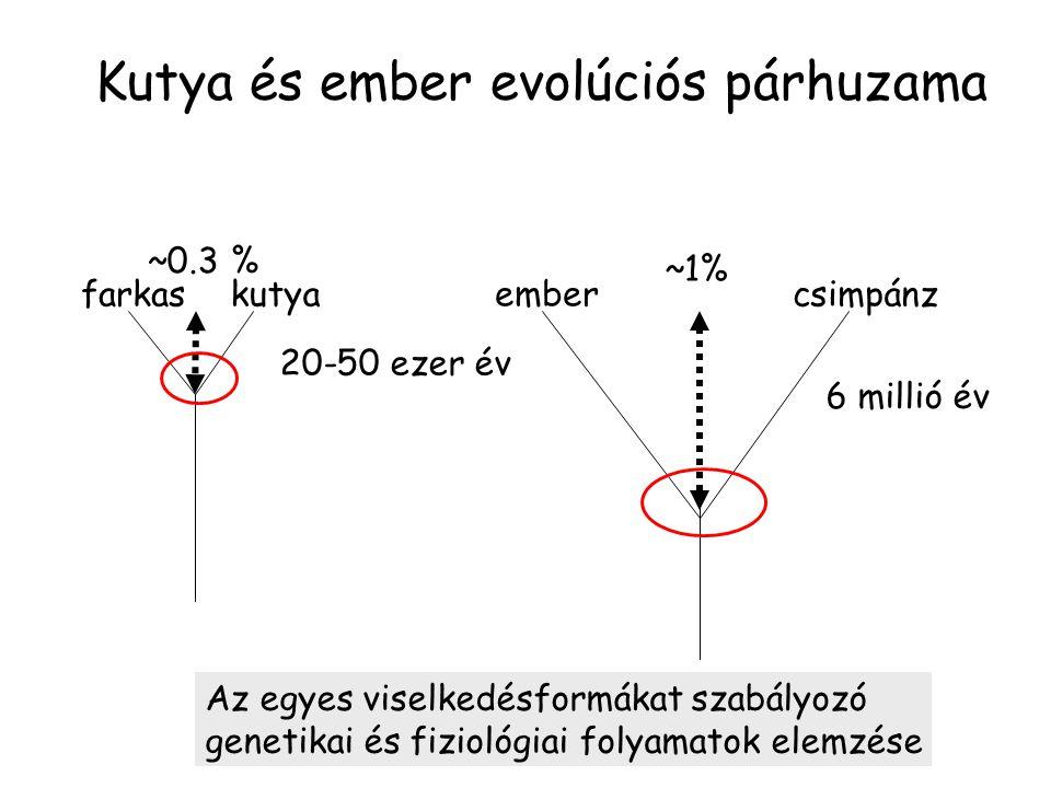 Kutya és ember evolúciós párhuzama csimpánz ember farkaskutya 6 millió év ~1% 20-50 ezer év ~0.3 % Az egyes viselkedésformákat szabályozó genetikai és fiziológiai folyamatok elemzése
