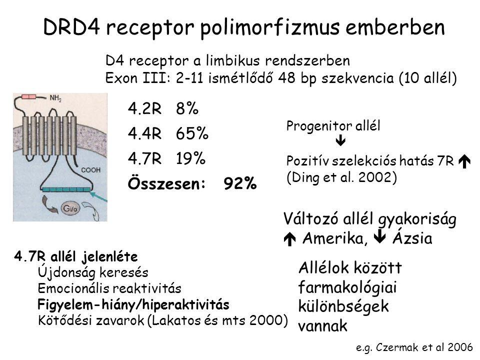 DRD4 receptor polimorfizmus emberben D4 receptor a limbikus rendszerben Exon III: 2-11 ismétlődő 48 bp szekvencia (10 allél) 4.7R allél jelenléte Újdonság keresés Emocionális reaktivitás Figyelem-hiány/hiperaktivitás Kötődési zavarok (Lakatos és mts 2000) 4.2R8% 4.4R65% 4.7R19% Összesen:92% Progenitor allél  Pozitív szelekciós hatás 7R  (Ding et al.