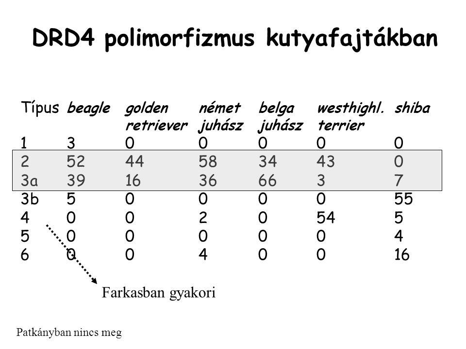 DRD4 polimorfizmus kutyafajtákban Típus beaglegoldennémetbelgawesthighl.shiba retrieverjuhászjuhászterrier 1300000 252445834430 3a3916366637 3b5000055 40020545 5000004 60040016 Patkányban nincs meg Farkasban gyakori