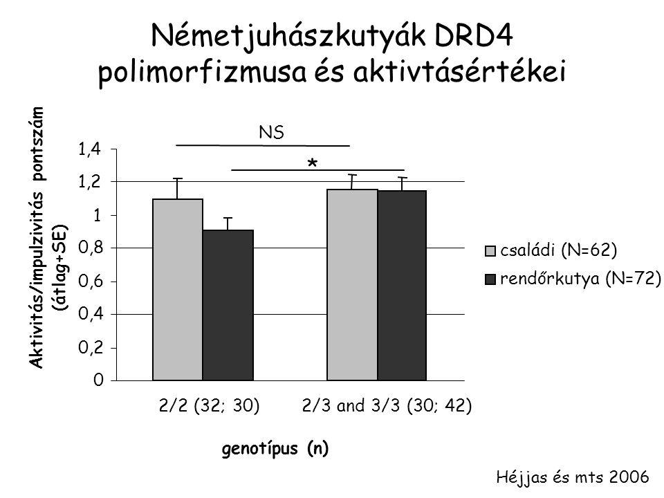 Németjuhászkutyák DRD4 polimorfizmusa és aktivtásértékei Héjjas és mts 2006 0 0,2 0,4 0,6 0,8 1 1,2 1,4 2/2 (32; 30)2/3 and 3/3 (30; 42) genotípus (n) Aktivitás/impulzivitás pontszám (átlag+SE) családi (N=62) rendőrkutya (N=72) NS *