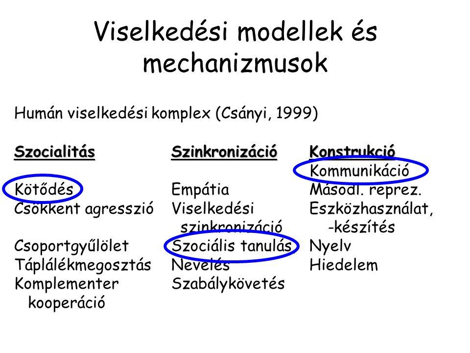 Viselkedési modellek és mechanizmusok Humán viselkedési komplex (Csányi, 1999) SzocialitásSzinkronizációKonstrukció Kommunikáció KötődésEmpátiaMásodl.