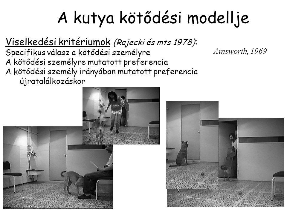 A kutya kötődési modellje Viselkedési kritériumok (Rajecki és mts 1978) : Specifikus válasz a kötődési személyre A kötődési személyre mutatott preferencia A kötődési személy irányában mutatott preferencia újratalálkozáskor Ainsworth, 1969