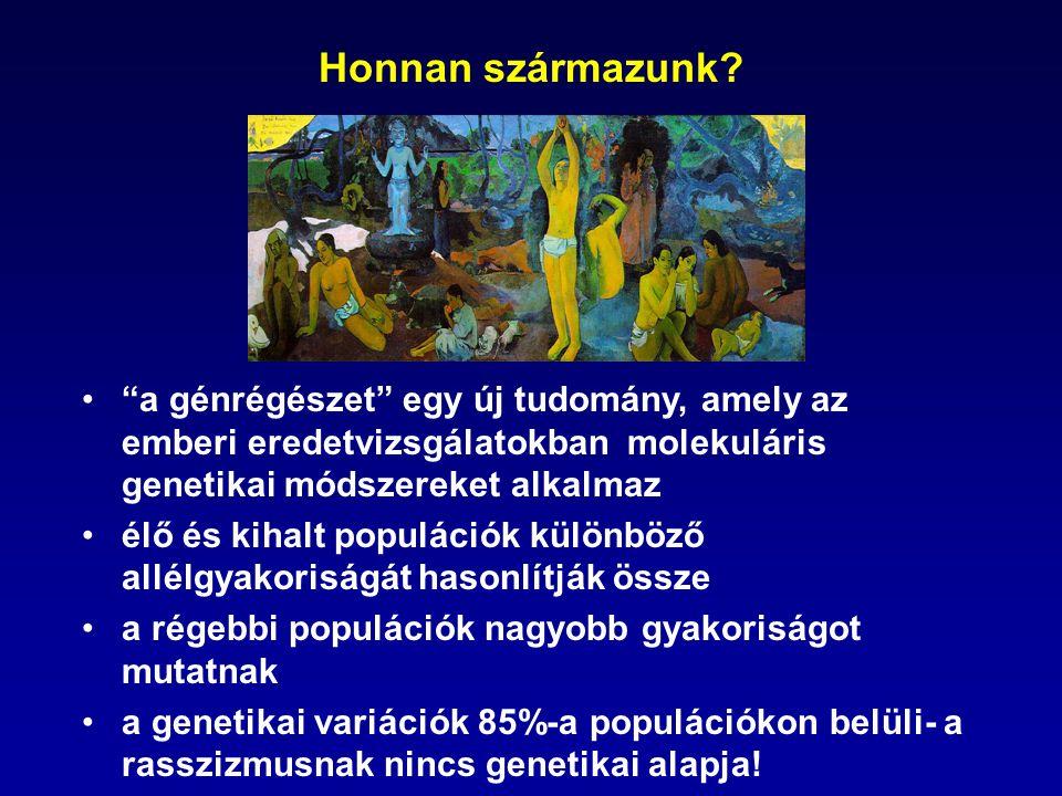 A nukleáris (autoszómális) gének öröklődése 20 emberöltő~1 millió ős R.I.