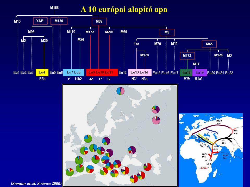 A 10 európai alapító apa (Semino et al. Science 2000) M13 Eu1 Eu2 Eu3 YAP + M96 M2M35 Eu4 Eu5 Eu6 M130 M89 M170 Eu7 Eu8 M26 M172 Eu9 Eu10 Eu11 M201 Eu