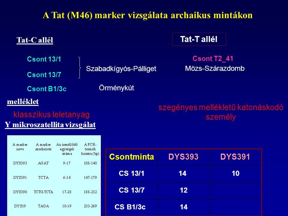 Tat-C allél Tat-T allél Csont T2_41 Csont 13/1 Csont B1/3c Mözs-Szárazdomb Csont 13/7 Szabadkígyós-Pálliget Örménykút A Tat (M46) marker vizsgálata ar