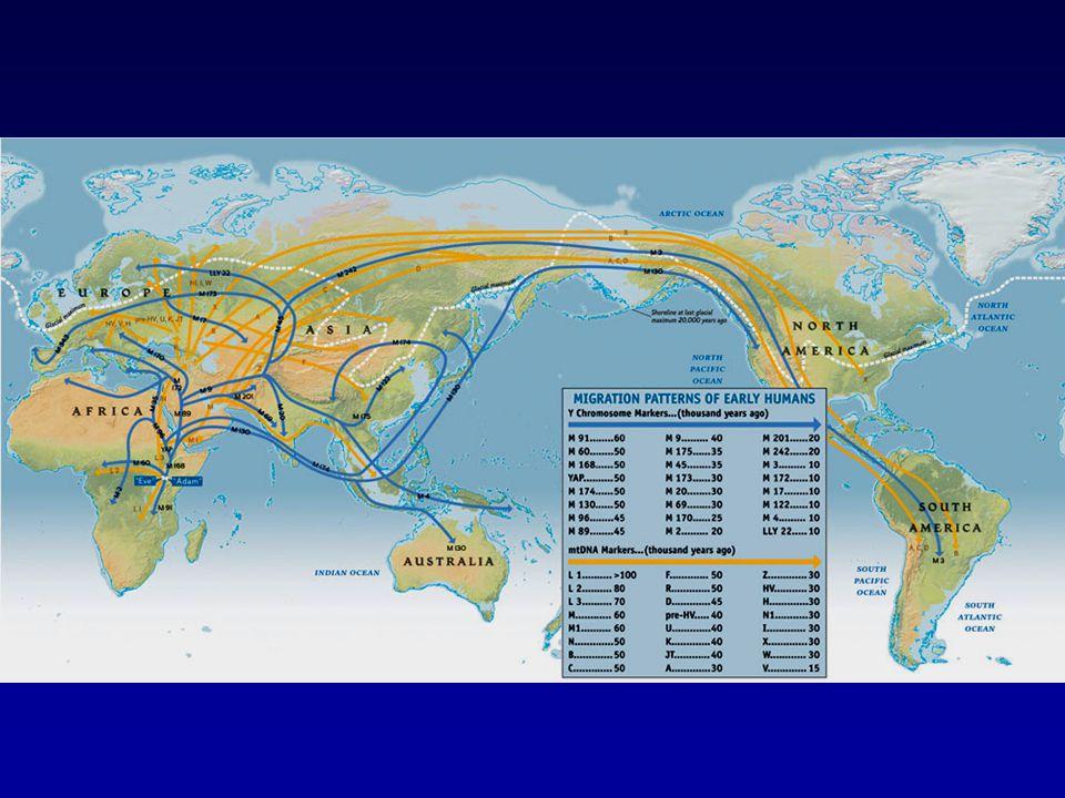 Célkitűzések mennyire volt genetikailag egységes a honfoglaló magyarság hazánk területére érkezésekor milyen arányban tartalmaz európai ill.