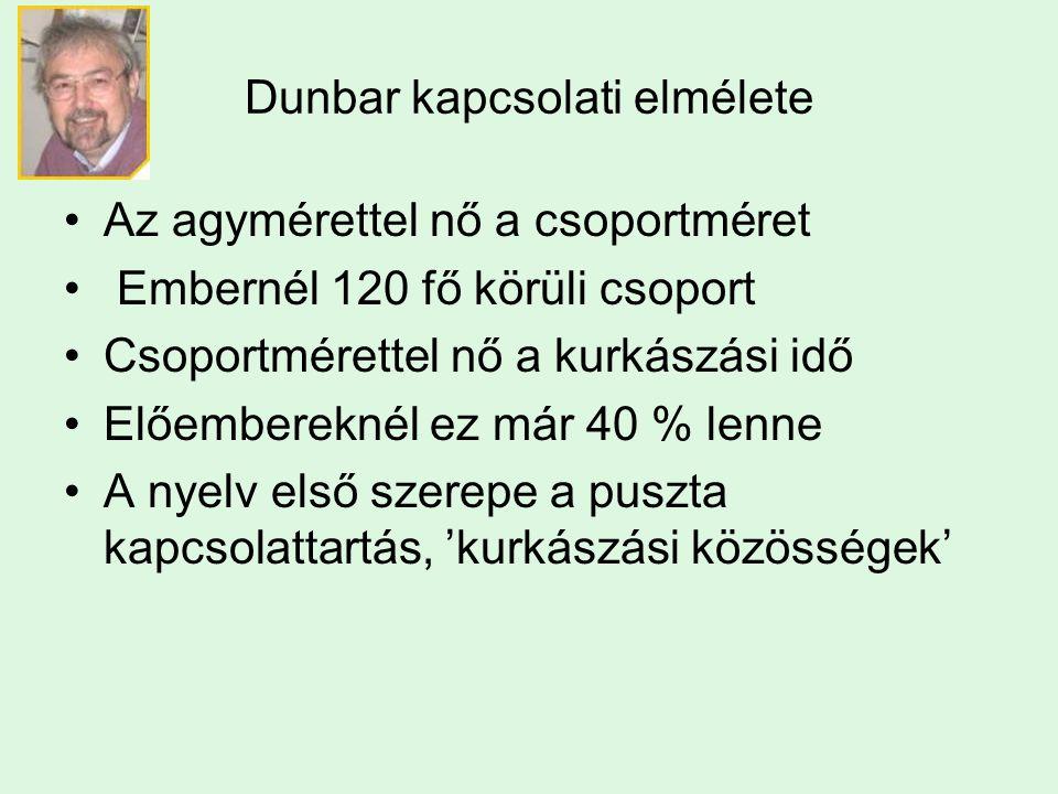 Dunbar kapcsolati elmélete Az agymérettel nő a csoportméret Embernél 120 fő körüli csoport Csoportmérettel nő a kurkászási idő Előembereknél ez már 40