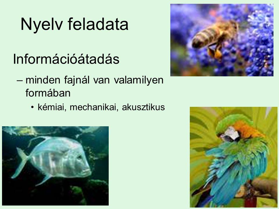 Nyelv feladata –minden fajnál van valamilyen formában kémiai, mechanikai, akusztikus Információátadás