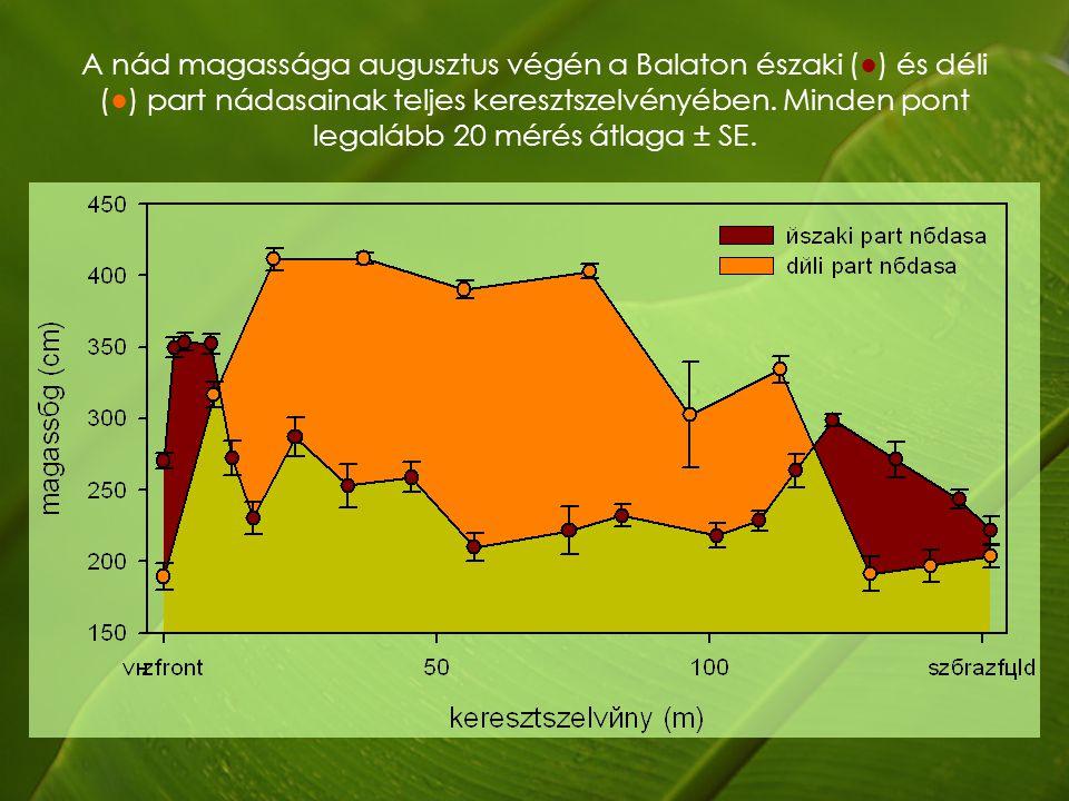 A nád magassága augusztus végén a Balaton északi (●) és déli (●) part nádasainak teljes keresztszelvényében.