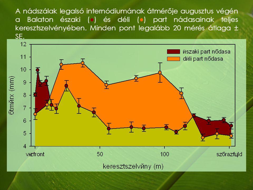 A nádszálak legalsó internódiumának átmérője augusztus végén a Balaton északi (●) és déli (●) part nádasainak teljes keresztszelvényében.