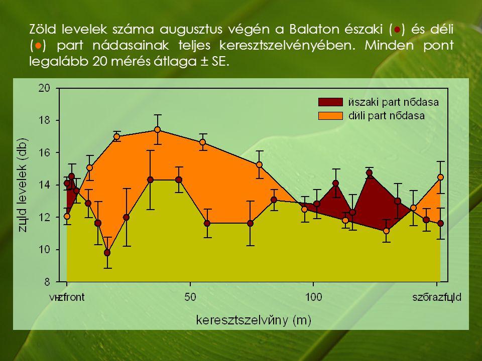 Zöld levelek száma augusztus végén a Balaton északi (●) és déli (●) part nádasainak teljes keresztszelvényében.