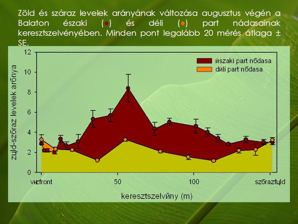 Zöld és száraz levelek arányának változása augusztus végén a Balaton északi (●) és déli (●) part nádasainak keresztszelvényében.