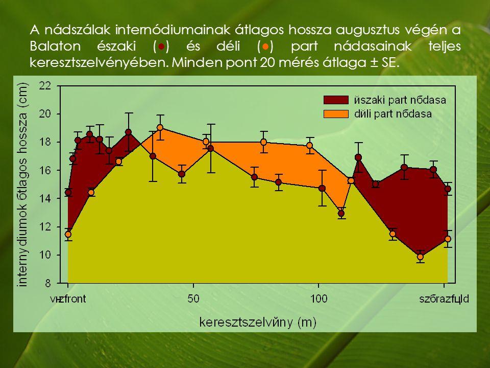 A nádszálak internódiumainak átlagos hossza augusztus végén a Balaton északi (●) és déli (●) part nádasainak teljes keresztszelvényében.