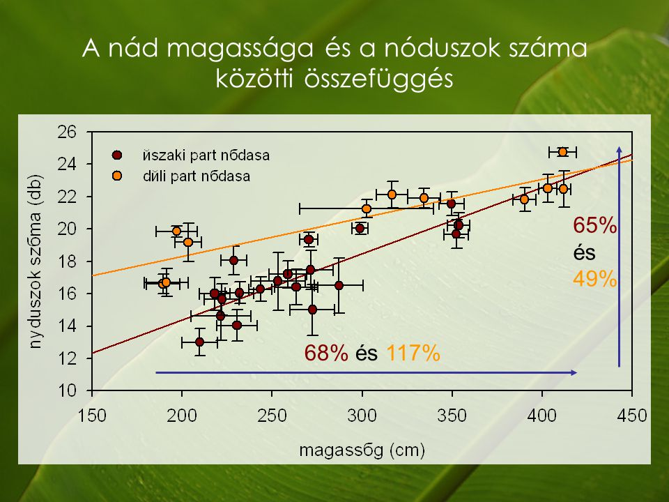 A nád magassága és a nóduszok száma közötti összefüggés 68% és 117% 65% és 49%