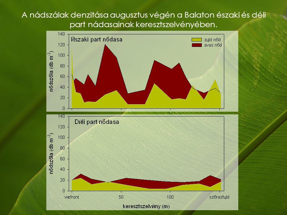 A nádszálak denzitása augusztus végén a Balaton északi és déli part nádasainak keresztszelvényében.
