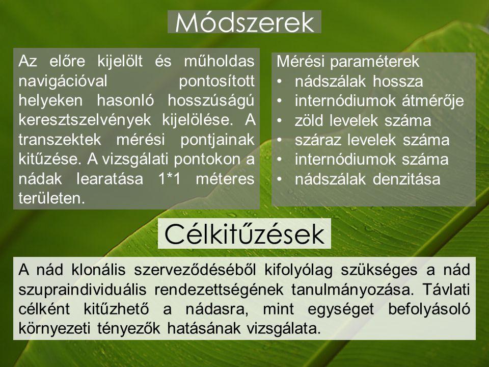 Módszerek Mérési paraméterek nádszálak hossza internódiumok átmérője zöld levelek száma száraz levelek száma internódiumok száma nádszálak denzitása A nád klonális szerveződéséből kifolyólag szükséges a nád szupraindividuális rendezettségének tanulmányozása.