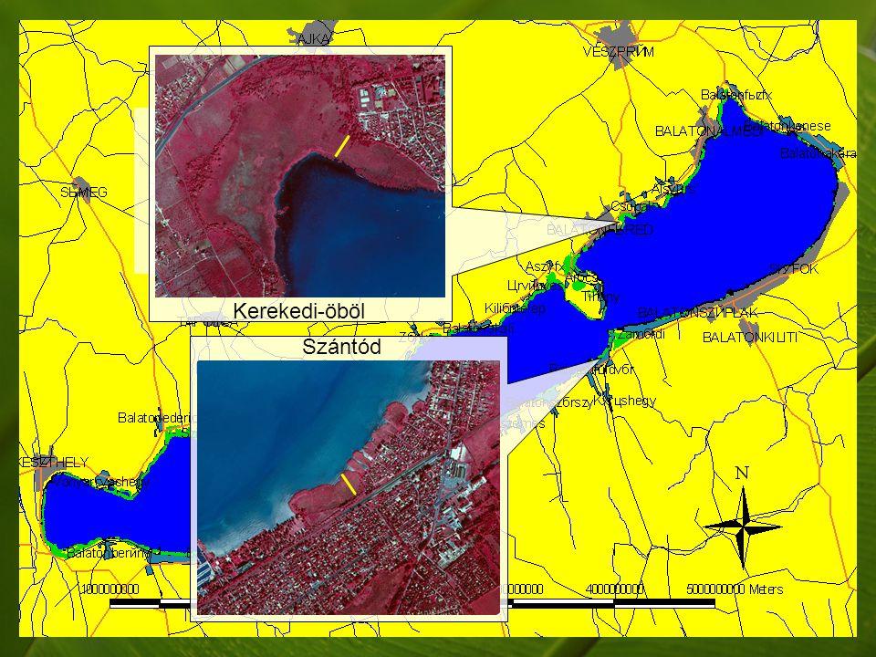 Száraz levelek száma augusztus végén a Balaton északi (●) és déli (●) part nádasainak teljes keresztszelvényében.