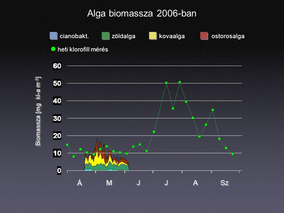 Alga biomassza 2006-ban cianobakt.zöldalgaostorosalgakovaalga Á Á M M J J J J A A Sz Biomassza [mg kl-a m -3 ] heti klorofill mérés