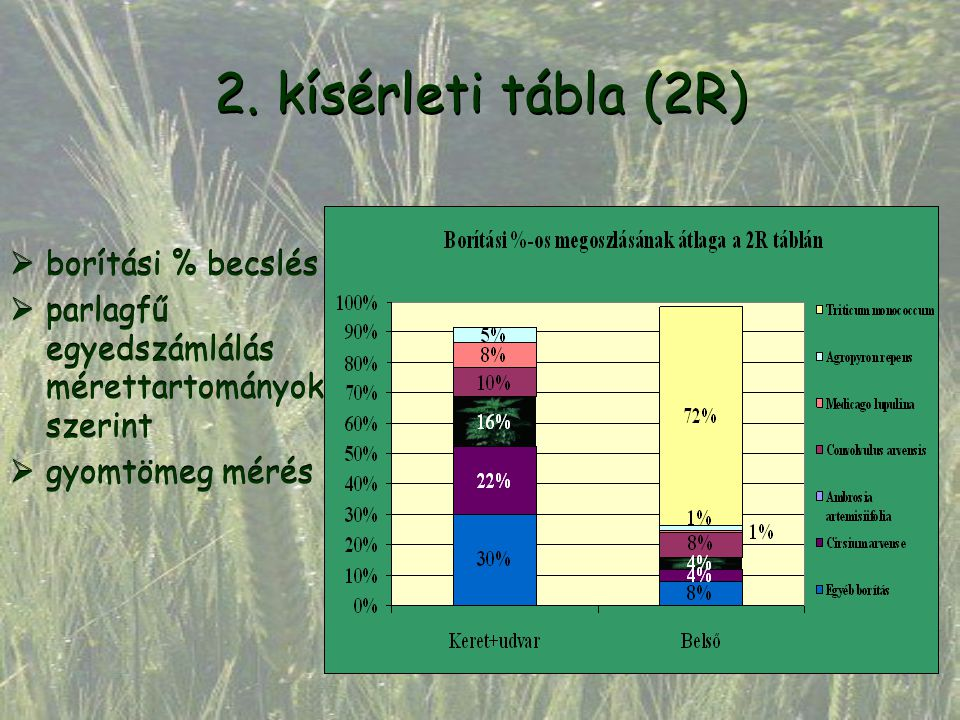 2. kísérleti tábla (2R)  borítási % becslés  parlagfű egyedszámlálás mérettartományok szerint  gyomtömeg mérés  borítási % becslés  parlagfű egye