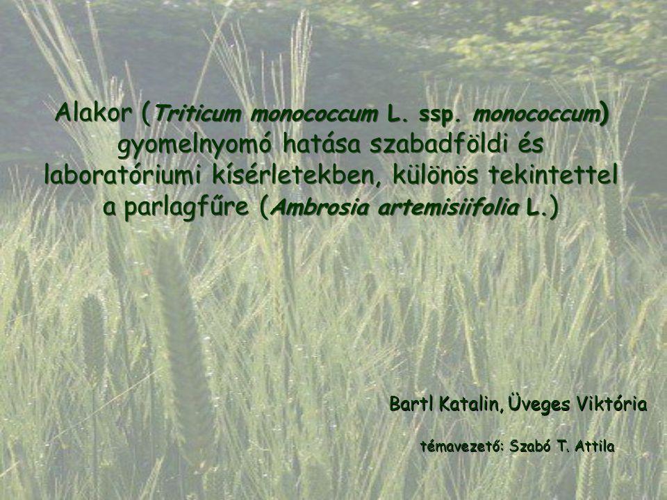 Alakor ( Triticum monococcum L. ssp. monococcum ) gyomelnyomó hatása szabadföldi és laboratóriumi kísérletekben, különös tekintettel a parlagfűre ( Am