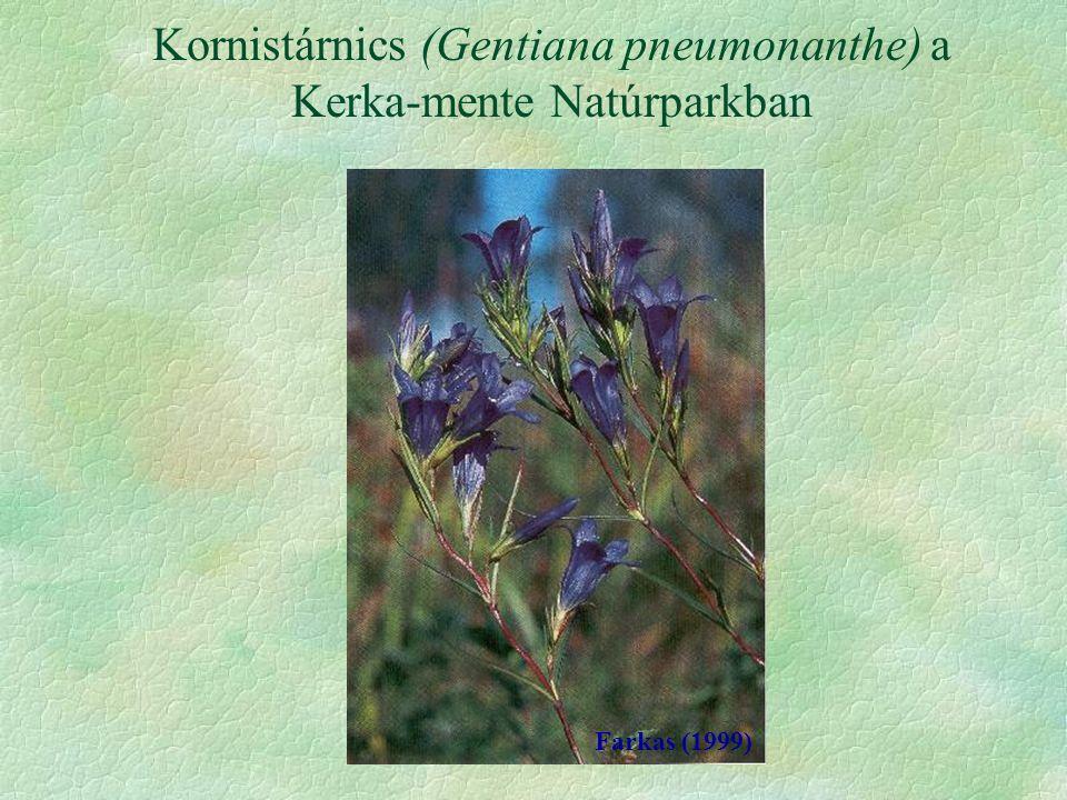 Kornistárnics (Gentiana pneumonanthe) a Kerka-mente Natúrparkban Farkas (1999)