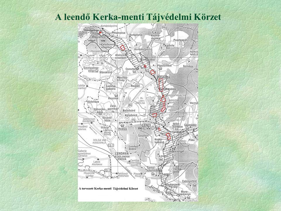 Kornistárnics (Gentiana pneumonanthe) §Tárnicsfélék közül Magyarországon a legelterjedtebb.