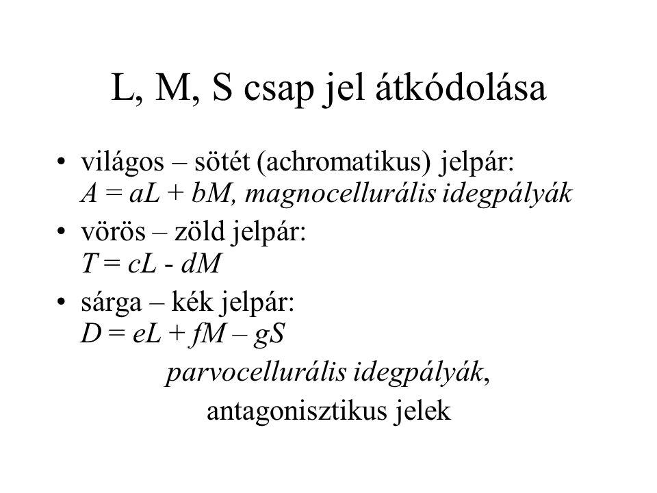 L, M, S csap jel átkódolása világos – sötét (achromatikus) jelpár: A = aL + bM, magnocellurális idegpályák vörös – zöld jelpár: T = cL - dM sárga – ké