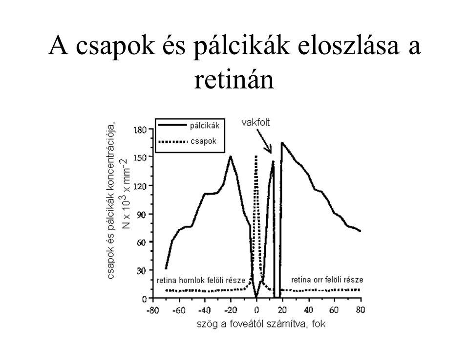 A csapok és pálcikák eloszlása a retinán