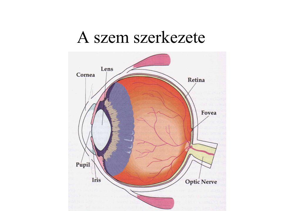 Képalkotás a szemben a corena és szemlencse képezi le a külvilágot a retinára dioptria: d = 1/f f: fókusztávolság m-ben mérve leképezési hibák a szemben –határvonal élessége –kromatikus aberráció