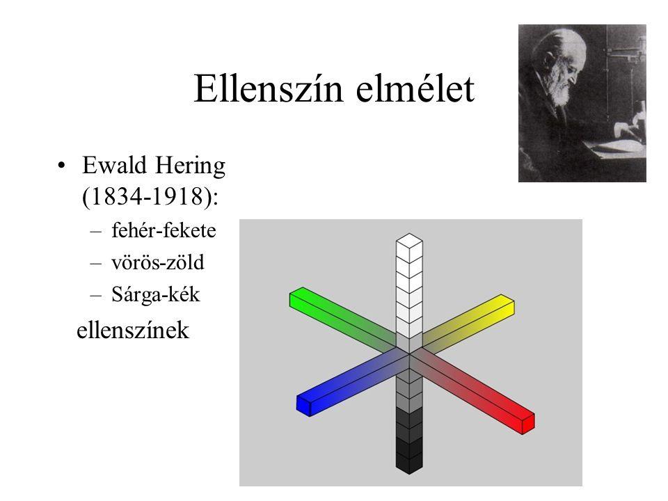 Ellenszín elmélet Ewald Hering (1834-1918): –fehér-fekete –vörös-zöld –Sárga-kék ellenszínek