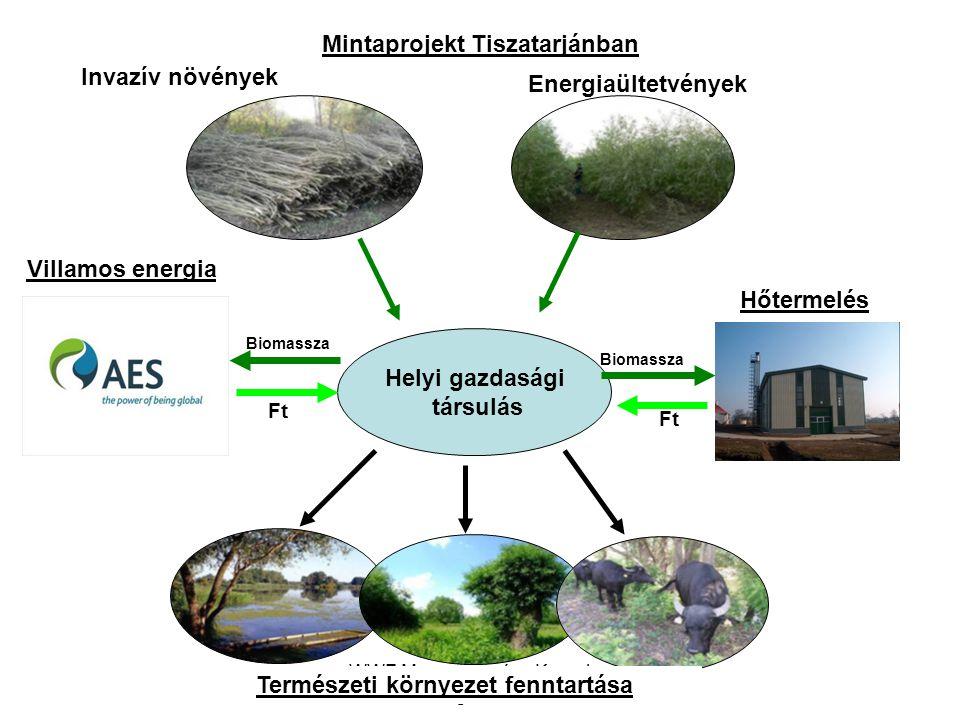 WWF Magyarország - Komplex megoldások Energiaültetvények Invazív növények Helyi gazdasági társulás Ft Természeti környezet fenntartása Biomassza Minta