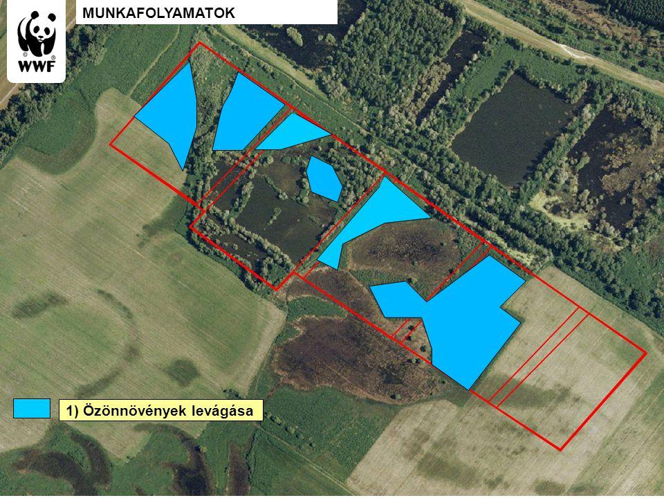 WWF Magyarország - Komplex megoldások 1) Özönnövények levágása MUNKAFOLYAMATOK