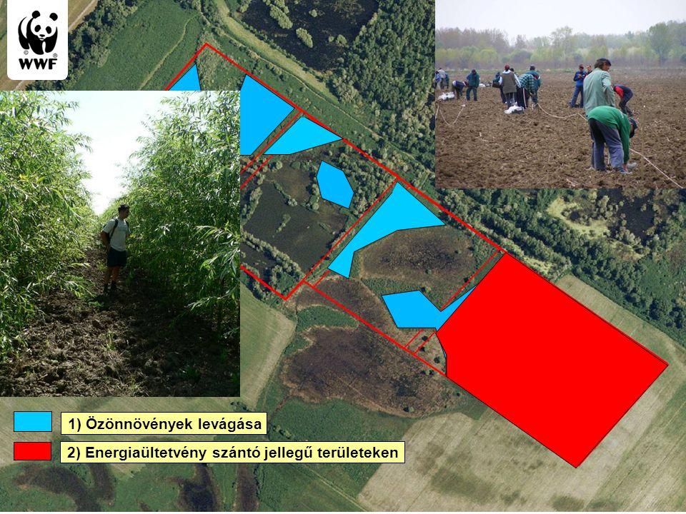 WWF Magyarország - Komplex megoldások 1) Özönnövények levágása 2) Energiaültetvény szántó jellegű területeken