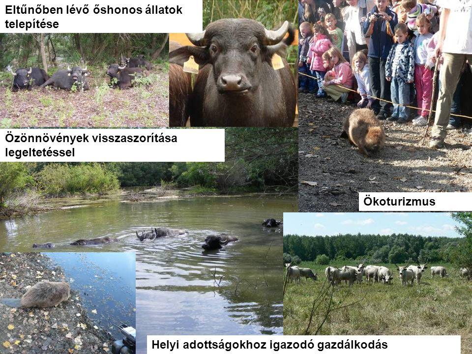 WWF Magyarország - Komplex megoldások Ökoturizmus Özönnövények visszaszorítása legeltetéssel Helyi adottságokhoz igazodó gazdálkodás Eltűnőben lévő ős