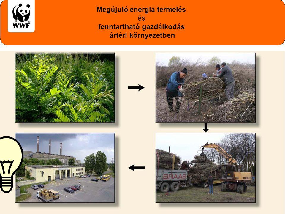 WWF Magyarország - Komplex megoldások Megújuló energia termelés és fenntartható gazdálkodás ártéri környezetben