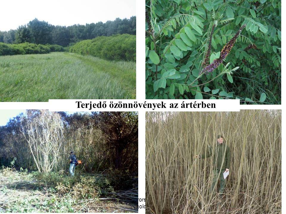 WWF Magyarország - Komplex megoldások Terjedő özönnövények az ártérben