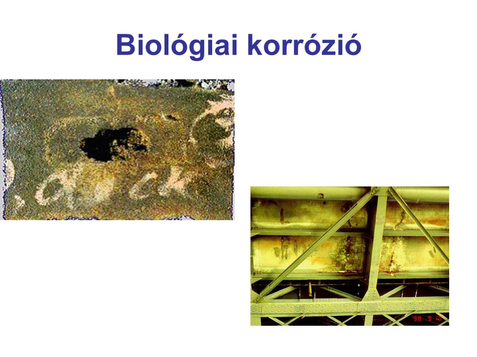 Biológiai korrózió